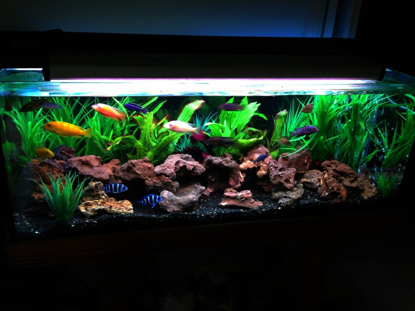 Rated #2: 60 Gallons Freshwater Fish Tank