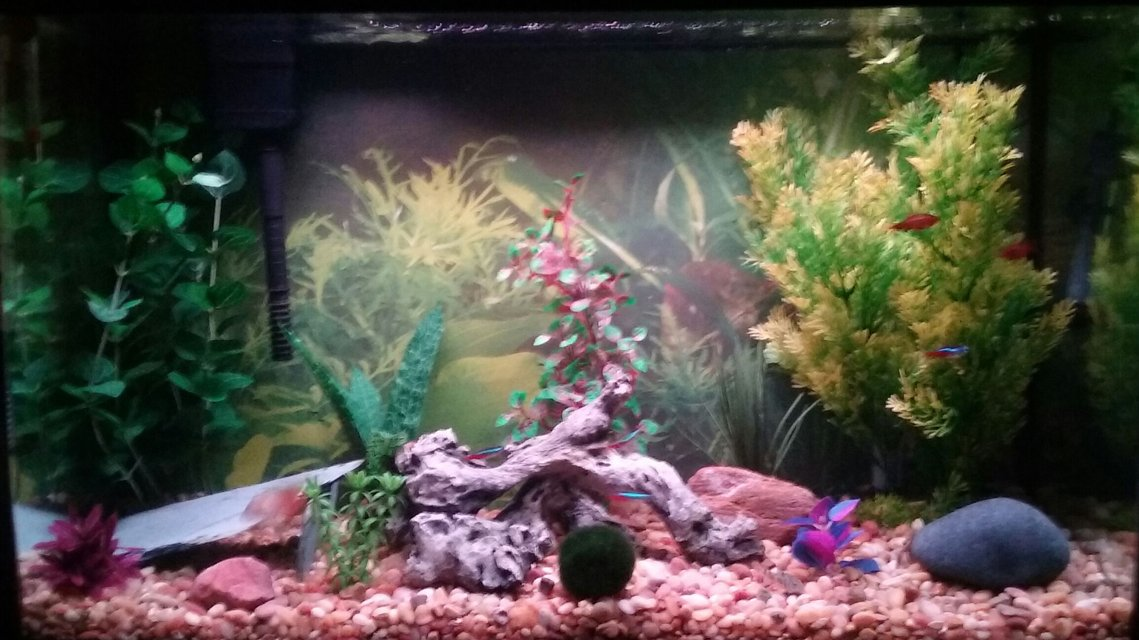 Rated #52: 29 Gallons Freshwater Fish Tank - None