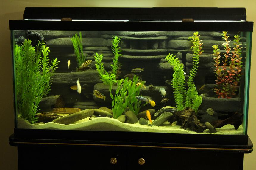 Rated #4: 95 Gallons Freshwater Fish Tank - My 95 Gallon DIY 3D background setup