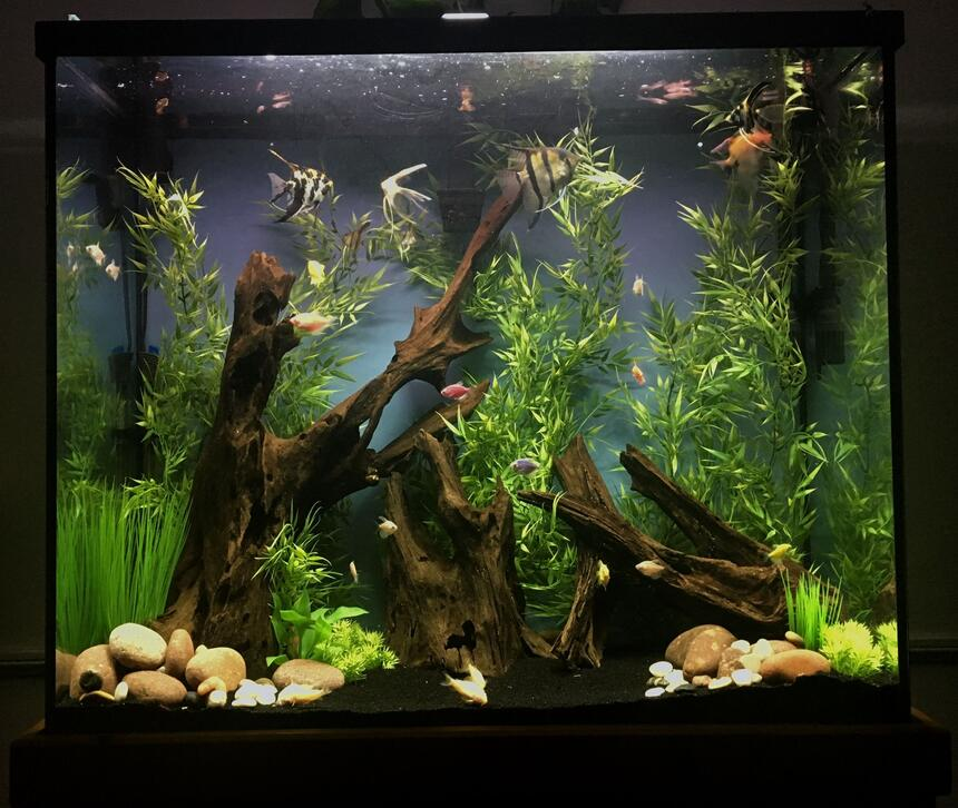 Rated #6: 70 Gallons Freshwater Fish Tank - 70 gallon tall unplanted community tank