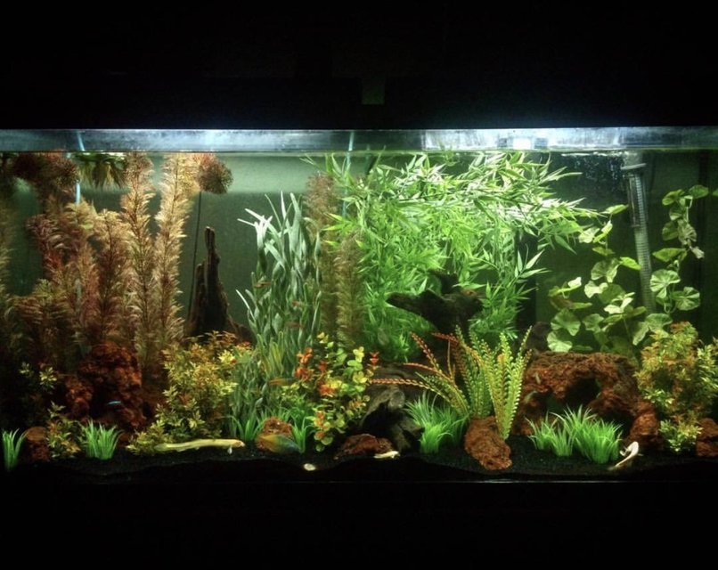 Rated #22: 60 Gallons Freshwater Fish Tank - 60 gallon, community tank with faux plants