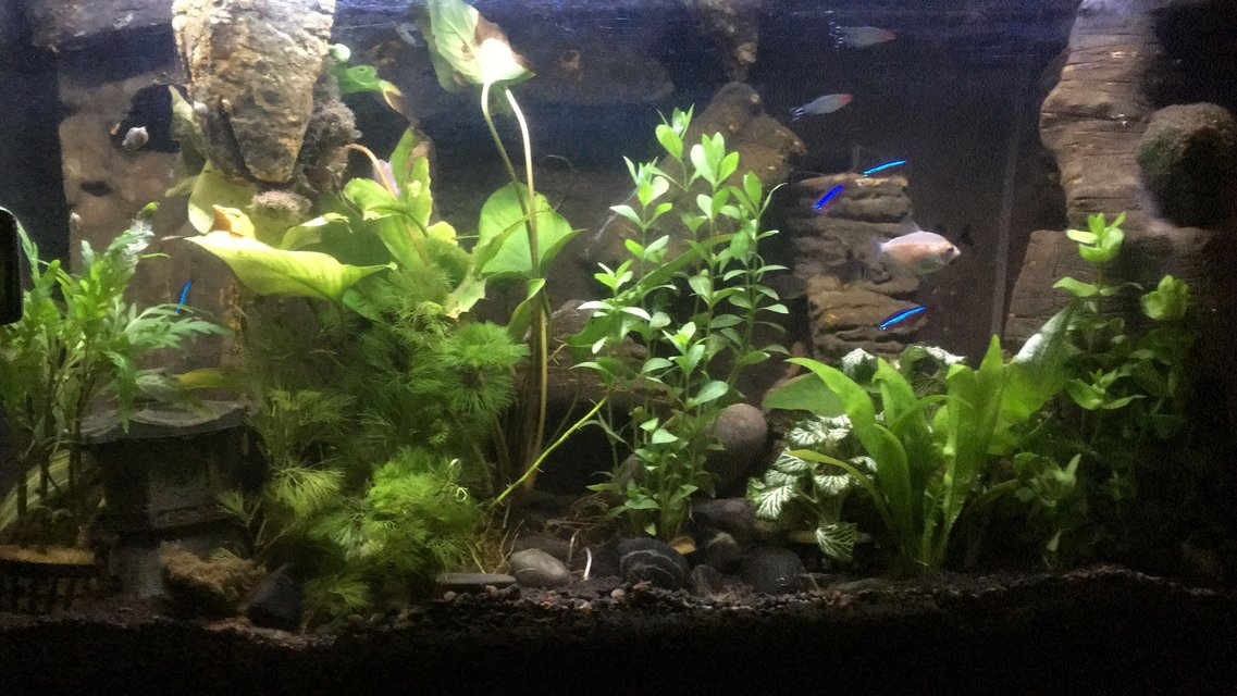 Rated #22: 25 Gallons Freshwater Fish Tank - DIY background with styrofoam and cement, has a sand/waterfall and all elements (filter, heater, hidden behind behind)