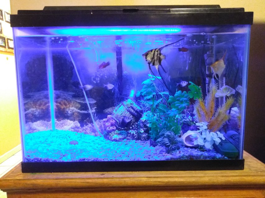 Rated #53: 20 Gallons Freshwater Fish Tank - 01032018 tank update
