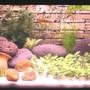 15 gallons freshwater fish tank (mostly fish and non-living decorations) - freshwater 15 gal tank