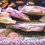 65 gallons freshwater fish tank (mostly fish and non-living decorations) - 65 gallon African Cichlid Tank