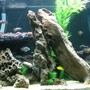 70 gallons freshwater fish tank (mostly fish and non-living decorations) - African Rift