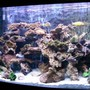 90 gallons freshwater fish tank (mostly fish and non-living decorations) - 90 gallon bowfront $ african cichlids