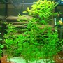 140 gallons freshwater fish tank (mostly fish and non-living decorations) - LOVE MY FISH TANK I HOPE YOU LIKE IT TO