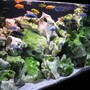 100 gallons freshwater fish tank (mostly fish and non-living decorations) - 380ltr mbuna
