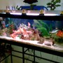 75 gallons freshwater fish tank (mostly fish and non-living decorations) - my tank.