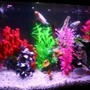 20 gallons freshwater fish tank (mostly fish and non-living decorations) - Basic Freshwater Tank