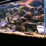 58 gallons freshwater fish tank (mostly fish and non-living decorations) - My 58 gallon Malawi cichlid tank