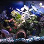 30 gallons freshwater fish tank (mostly fish and non-living decorations) - My tank