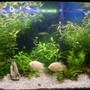 66 gallons freshwater fish tank (mostly fish and non-living decorations) - another view