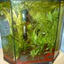 10 gallons freshwater fish tank (mostly fish and non-living decorations) - freshwater tank