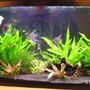 40 gallons freshwater fish tank (mostly fish and non-living decorations) - 40 gal planted tank.