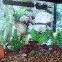 20 gallons freshwater fish tank (mostly fish and non-living decorations) - 20 Gal