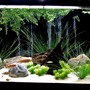 135 gallons freshwater fish tank (mostly fish and non-living decorations) - 135 gal oceanic