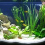 40 gallons freshwater fish tank (mostly fish and non-living decorations) - Front on!
