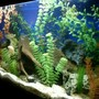 30 gallons freshwater fish tank (mostly fish and non-living decorations) - 30 gl freshwater