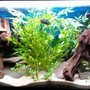 29 gallons freshwater fish tank (mostly fish and non-living decorations) - This is the most updated picture of my tank as of April 2009. Sorry the quality is crap but you get the idea :)