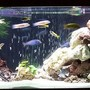 110 gallons freshwater fish tank (mostly fish and non-living decorations) - 110 gal rearanged
