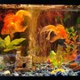 10 gallons freshwater fish tank (mostly fish and non-living decorations) - another shot