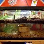 10 gallons freshwater fish tank (mostly fish and non-living decorations) - tank full view of both ecosystems