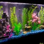 freshwater fish tank (mostly fish and non-living decorations) - 55 gallon community tank