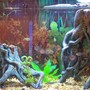 30 gallons freshwater fish tank (mostly fish and non-living decorations) - this is my 30 gallon tank its alittle blurry but you get just of it. ill upload one of my 10 gallon soon