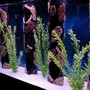 80 gallons freshwater fish tank (mostly fish and non-living decorations) - 80 Gallon Cichlid Tank