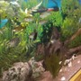 100 gallons freshwater fish tank (mostly fish and non-living decorations) - Aquarium