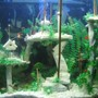 80 gallons freshwater fish tank (mostly fish and non-living decorations) - Atlantis - the buried city