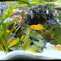 132 gallons freshwater fish tank (mostly fish and non-living decorations) - My best TV chanell