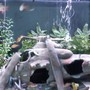 52 gallons freshwater fish tank (mostly fish and non-living decorations) - i have changed decor