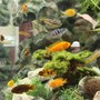 58 gallons freshwater fish tank (mostly fish and non-living decorations) - My aquarium can be viewed from all 4 sides. This is the most panoramic view. Please see all the other photos too
