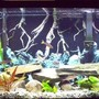 46 gallons freshwater fish tank (mostly fish and non-living decorations) - 55 gallon Tanganyika Community Tank