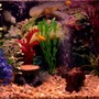 40 gallons freshwater fish tank (mostly fish and non-living decorations) - My 20 gallon high freshwater fish tank.