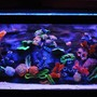 freshwater fish tank (mostly fish and non-living decorations) - A.I Salt water Reef