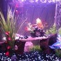 30 gallons freshwater fish tank (mostly fish and non-living decorations) - new updated tank please rate and comment 1 oscar 1 peach peacock 11 bloodfin tetras 1 polkadot catfish