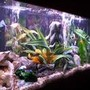 55 gallons freshwater fish tank (mostly fish and non-living decorations) - My tank now in TX