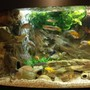 72 gallons freshwater fish tank (mostly fish and non-living decorations) - 3D rock elements