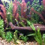 135 gallons freshwater fish tank (mostly fish and non-living decorations)