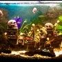 180 gallons freshwater fish tank (mostly fish and non-living decorations) - Shipwrecked