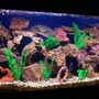 125 gallons freshwater fish tank (mostly fish and non-living decorations) - 125 frontosa colony