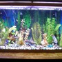 55 gallons freshwater fish tank (mostly fish and non-living decorations) - Picture of my tank rearranged with different fish Bad quality taken with cell phone