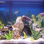 29 gallons freshwater fish tank (mostly fish and non-living decorations) - 29 gallon cichlid tank
