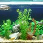 220 gallons freshwater fish tank (mostly fish and non-living decorations) - I hope you will be love it.