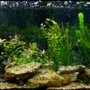 22 gallons freshwater fish tank (mostly fish and non-living decorations) - My 3ft Tropical Community Tank