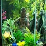 35 gallons freshwater fish tank (mostly fish and non-living decorations) - Old world with new growth